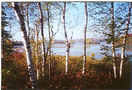 autumn-bog