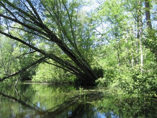 river-bank
